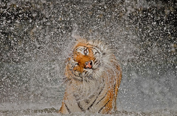 "Foto ganadora ""Natura"" National Geographic 2012"